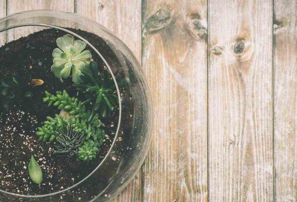 Pianta in un terrario di vetro