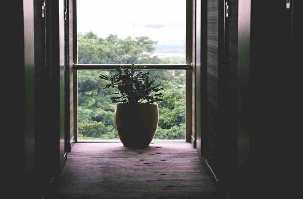Pianta per il soggiorno