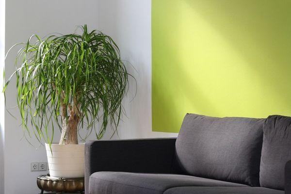 salotto con pianta