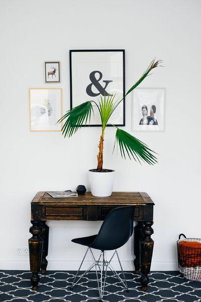 Scrivania con pianta